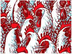 20 Billion Chickens