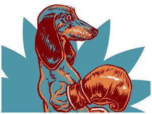 Boxing Wiener