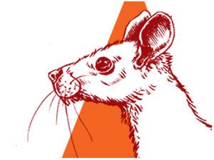Rat Boxer