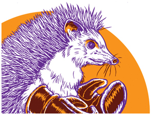 Boxing HedgeHog