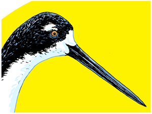 Ae'o Endangered Hawaiian Stilt print